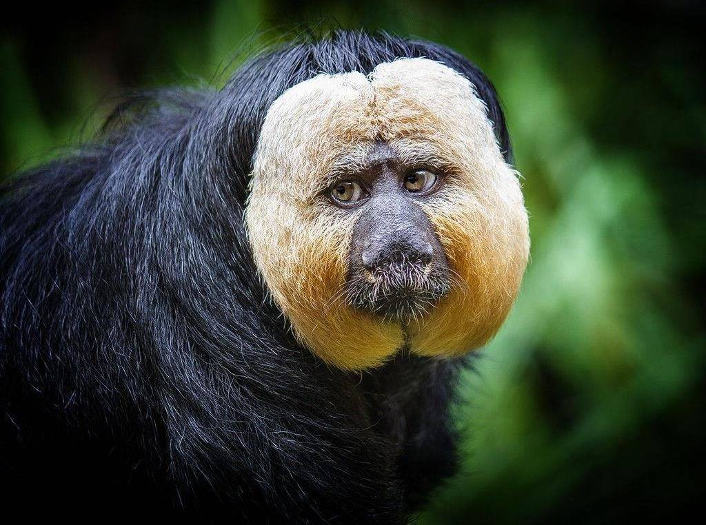 ТОП-11 животных, которым пора на моделирование бороды и усов